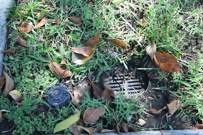 Underground drains that channel irrigation and rain runoff from backyards to the front are suspected Aedes aegypti breeding areas.