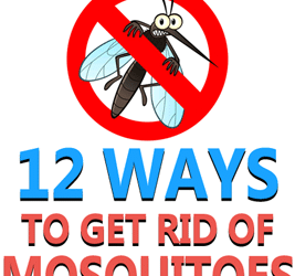 12 Ways to Get Rid of Mosquitoes
