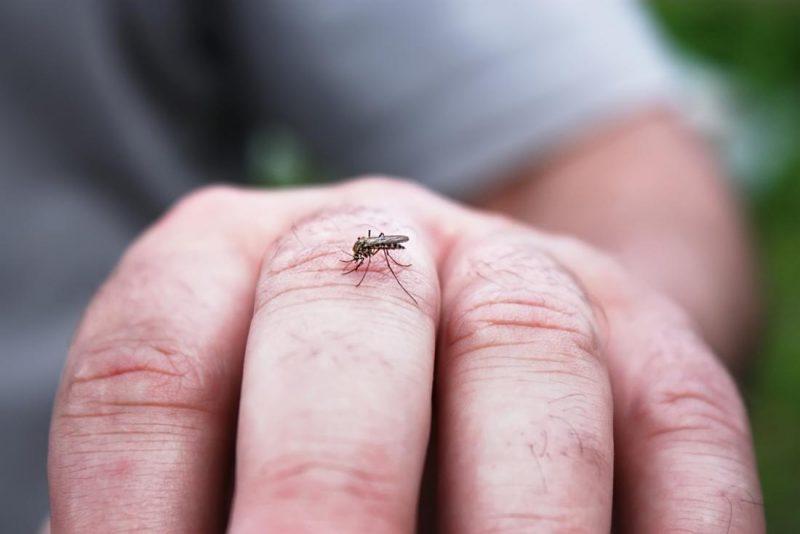 A dengue mosquito biting a man's hand