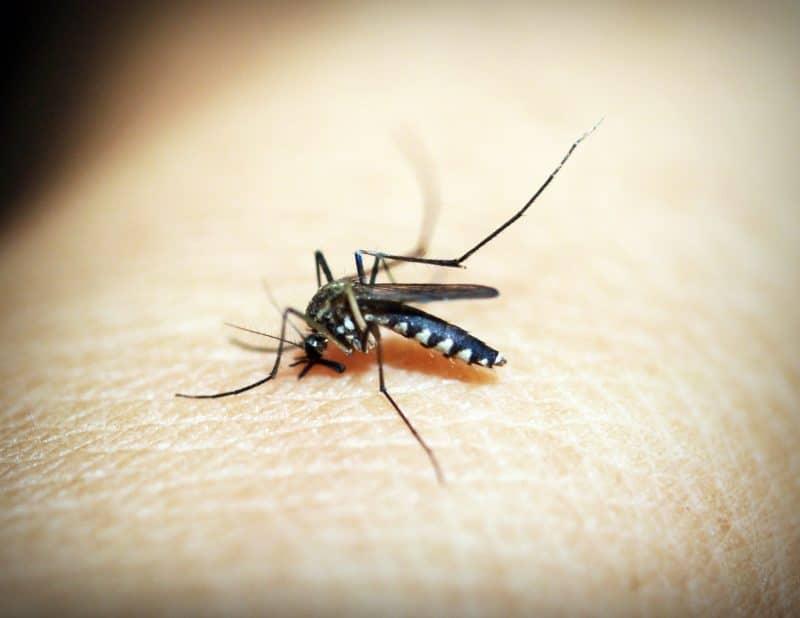 Aedes mosquito causes dengue hemorrhagic fever
