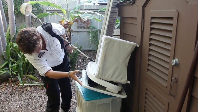 Cleaning the yard to remove stagnant water and mosquito nesting sites