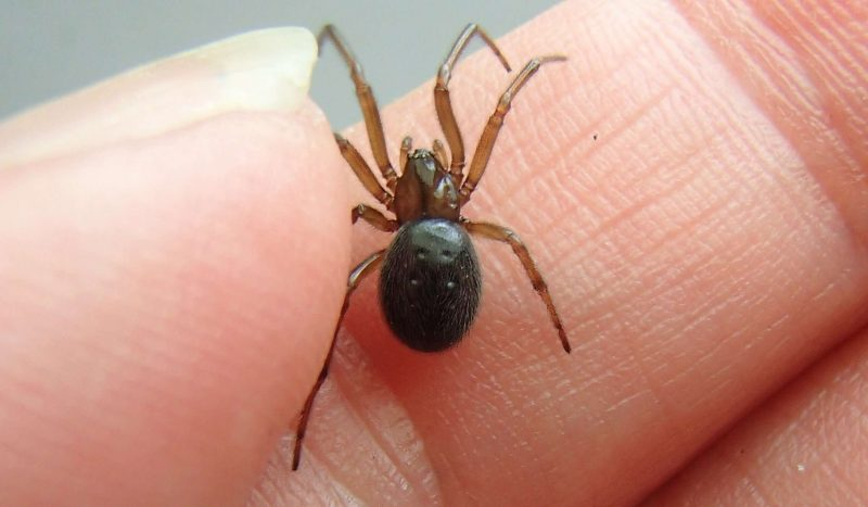 House spider on a woman's hand