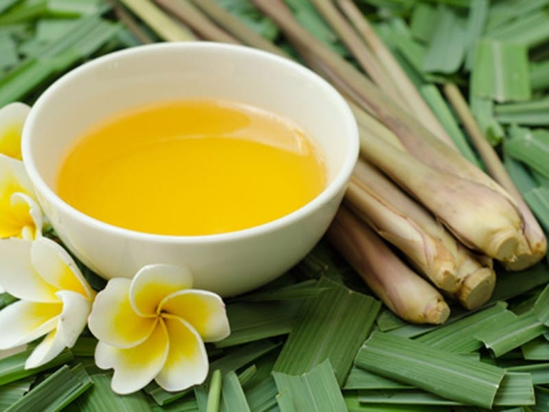 related studies about lemongrass as insect repellent