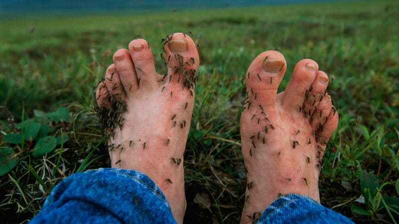 Mosquitoes like to bite feet and ankles