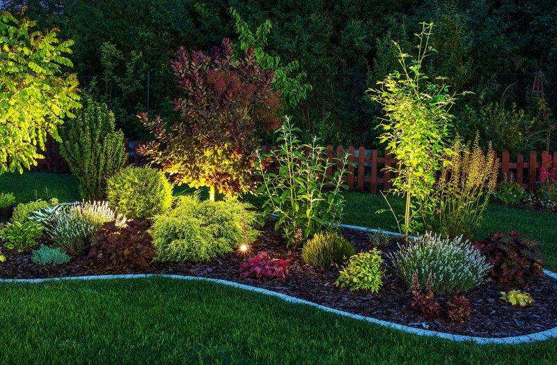 Mosquito-repelling plants around the garden
