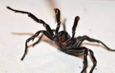 House spiders tend to prowl for insects
