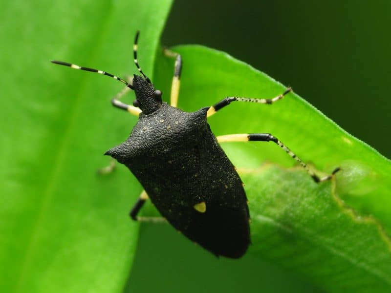 These insects can stay in your garden