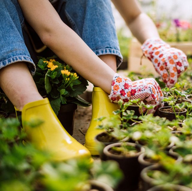 Woman gardening without insects present